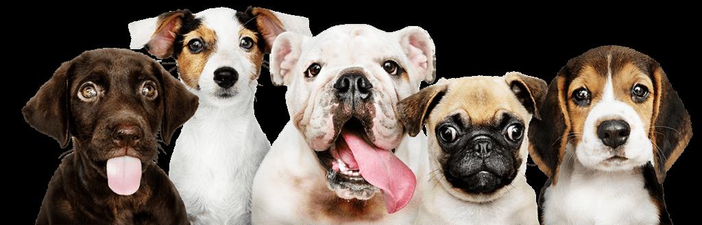 Creche Cães Araraquara