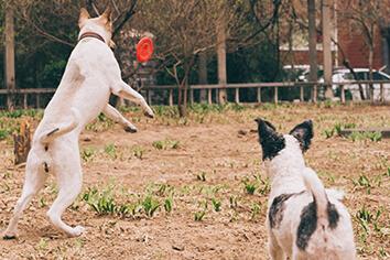 Socialização Cachorros